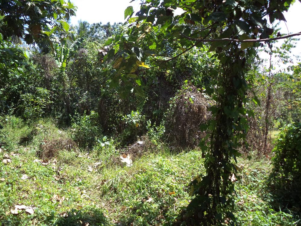 Great land 50 are Cekomaria Denpasar