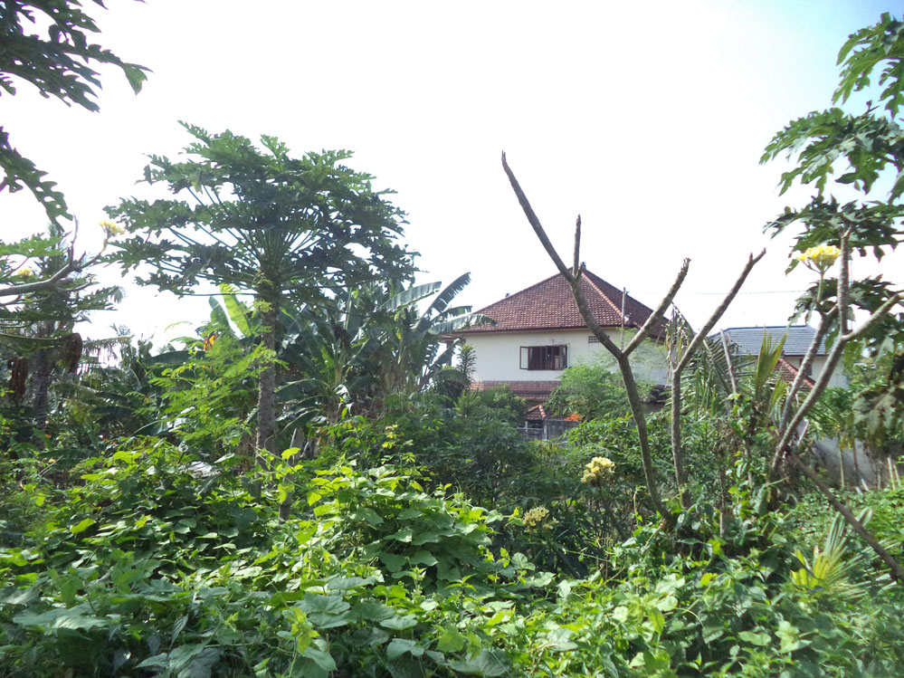 Great land leasehold 9.15 are Canggu Tagtag
