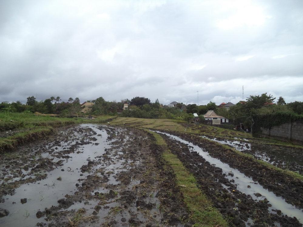 Beautiful land lease 17.75 are - Padang Linjong Canggu