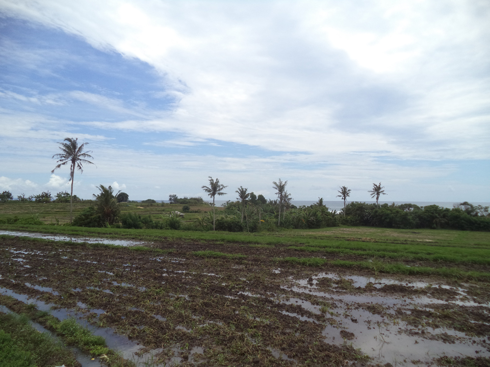 Gorgeous freehold land oceanview Tabanan Bali