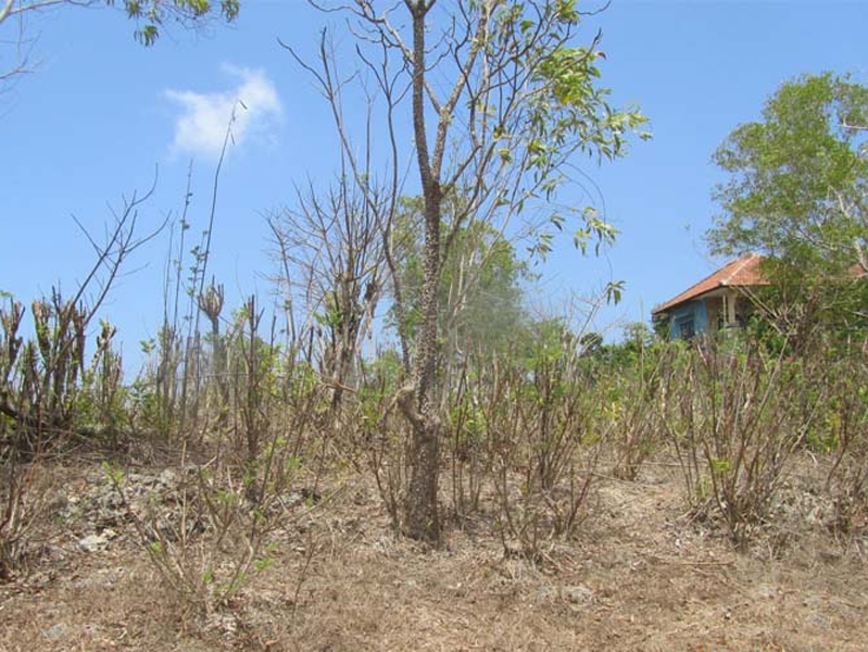 11 are Freehold land for sale - Padang Padang