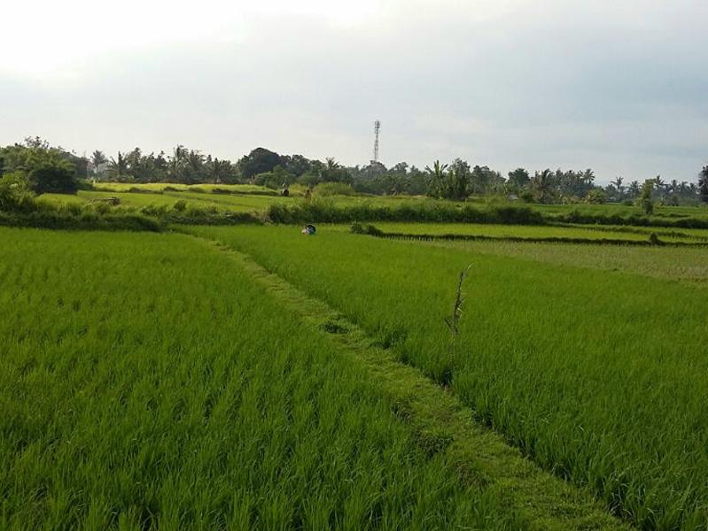 Nice land 23.50 are Pandak Gede Tabanan