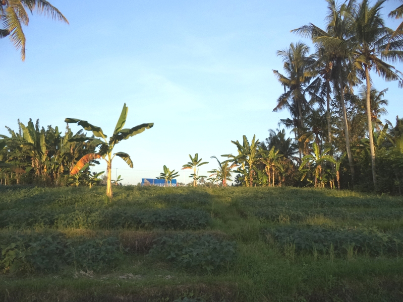 Great land with sunset view 2000 sqm