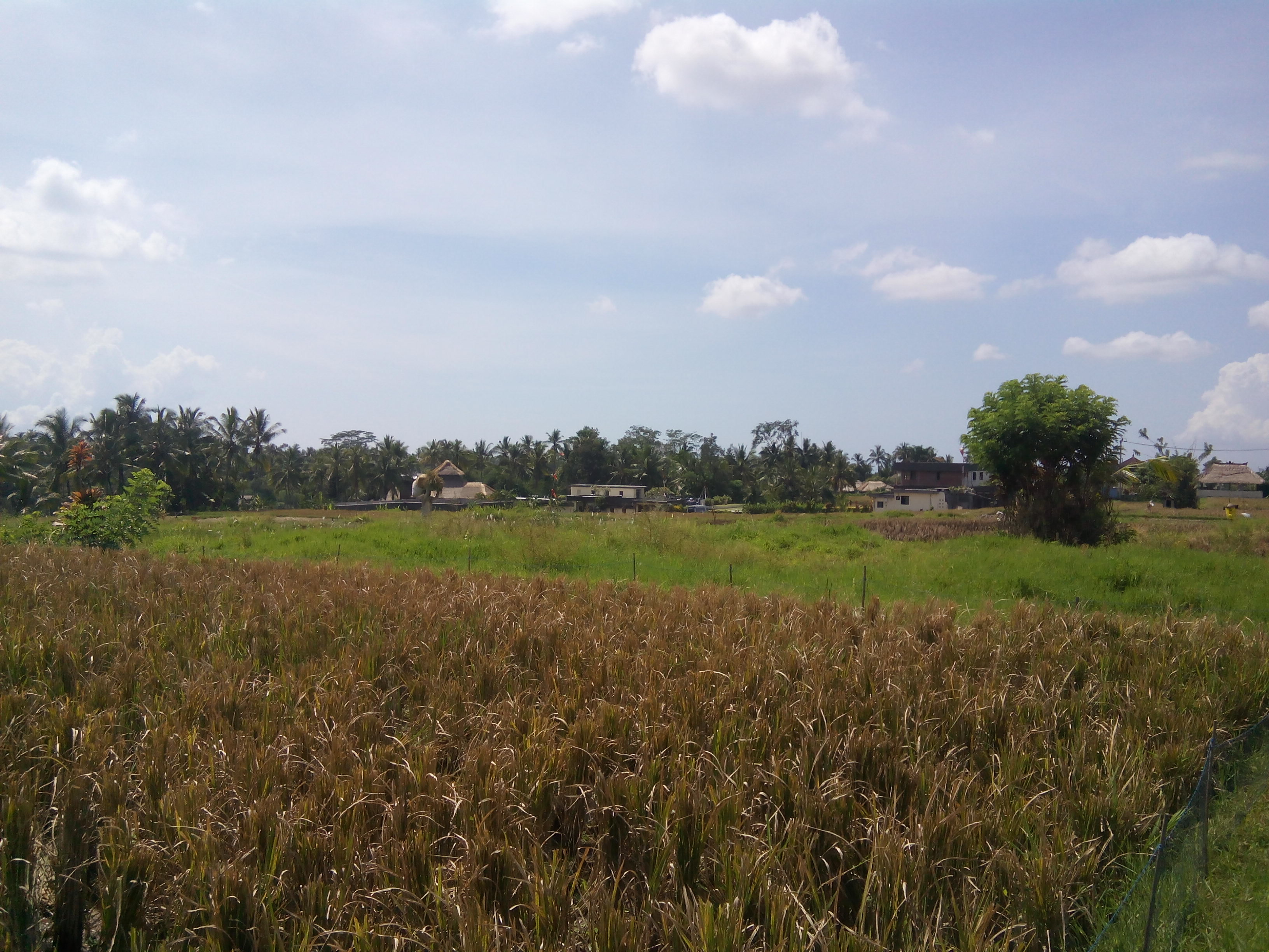 19 ara freehold 5 minutes from ubud centre