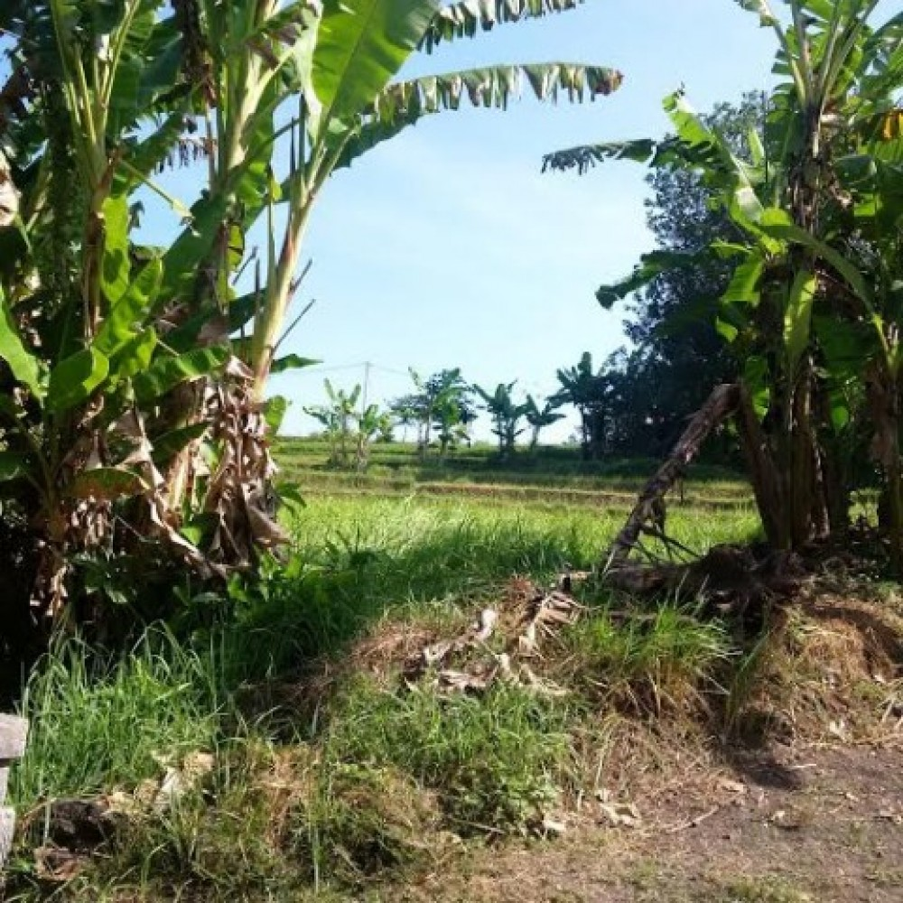 Beautiful Rice Field View Freehold Land For Sale in Tabanan