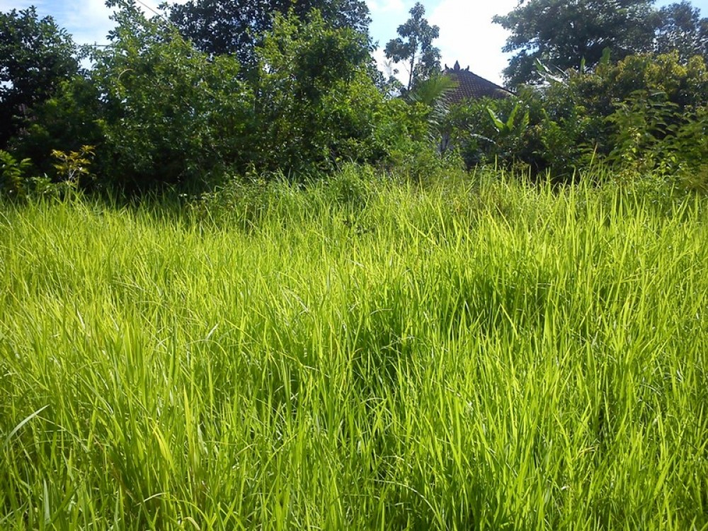 Strategically Located Freehold Land in Ungasan Bukit