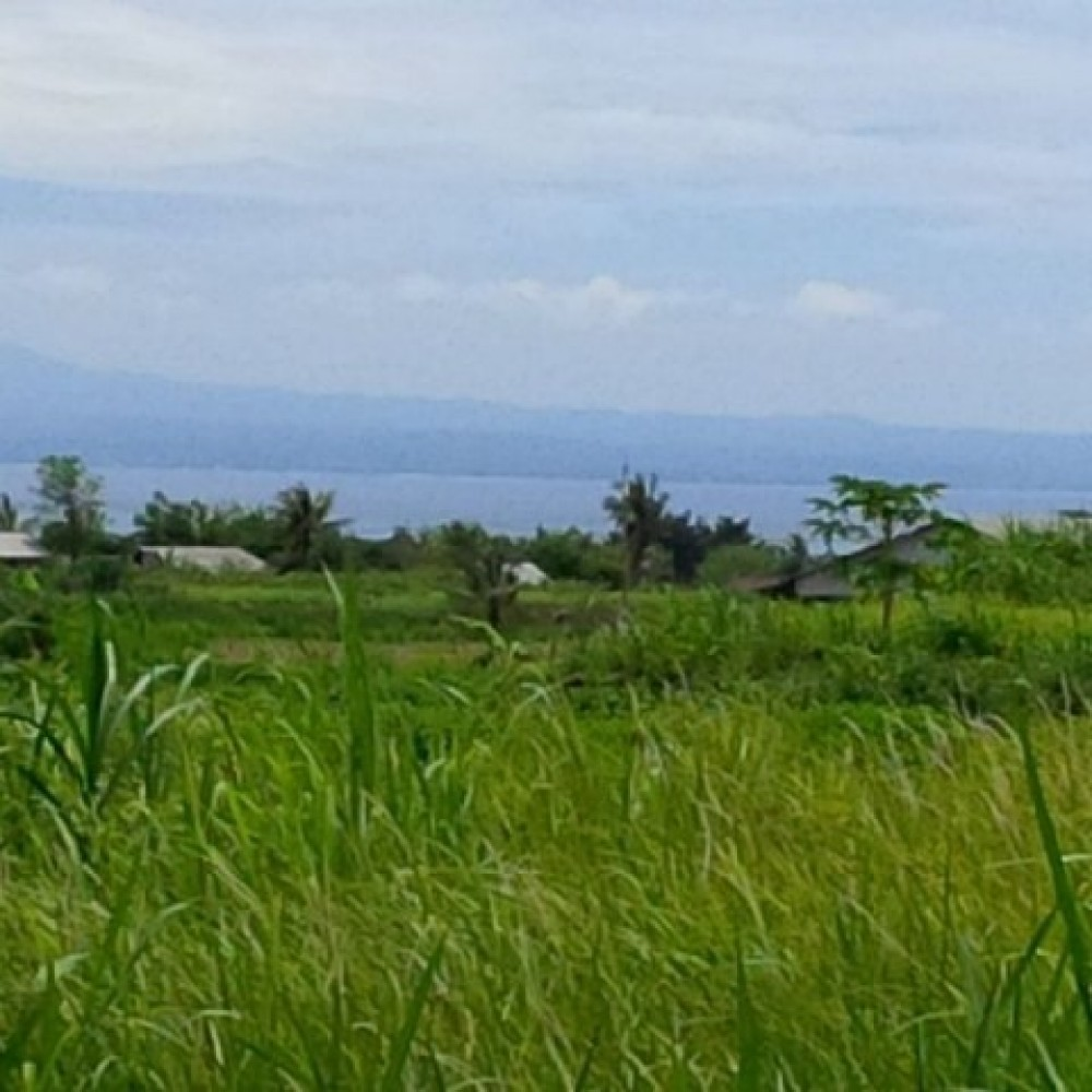 Good Potential Freehold Development Land in Gianyar
