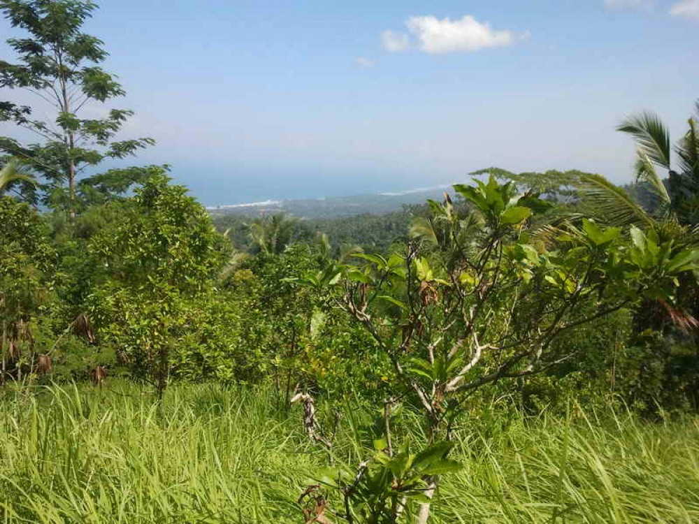86 Are Freehold Land in Tabanan