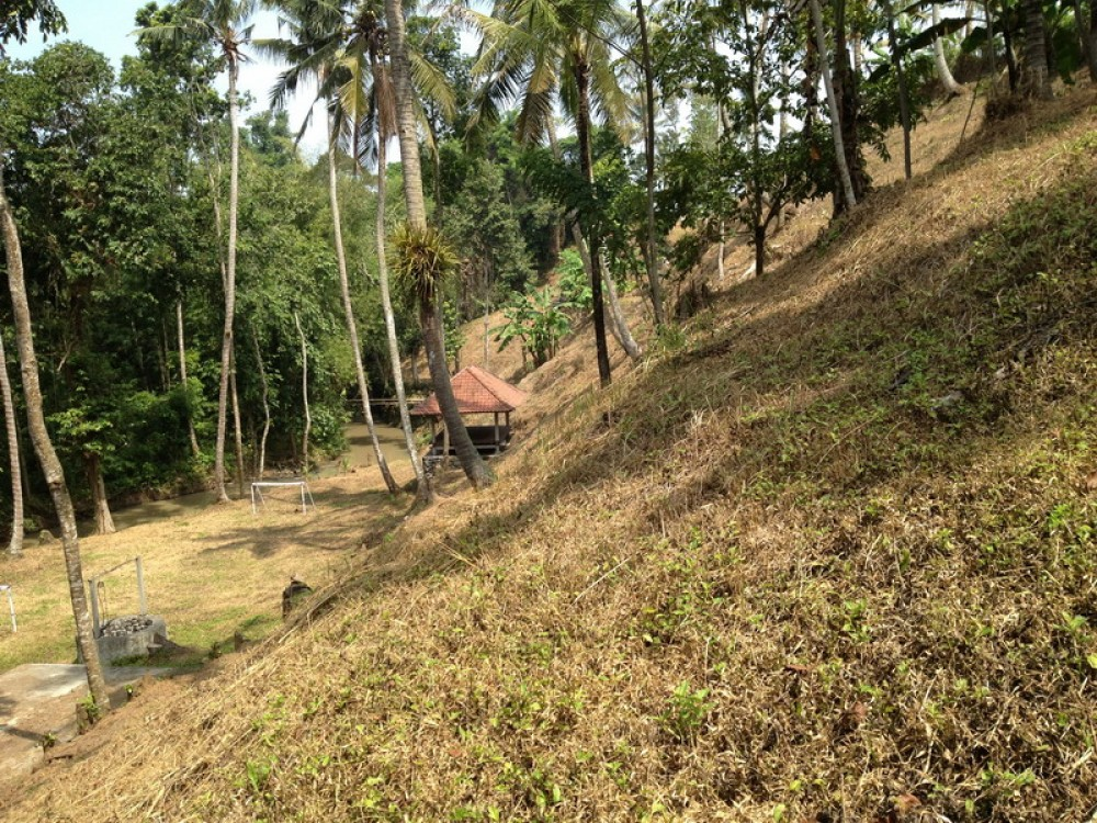Rice Field River View Freehold Land in Tabanan