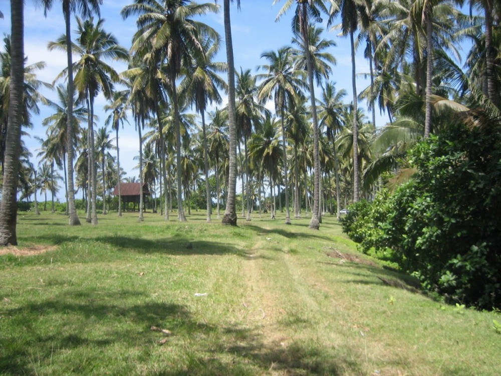 Best Beachfront Freehold Land in Tabanan