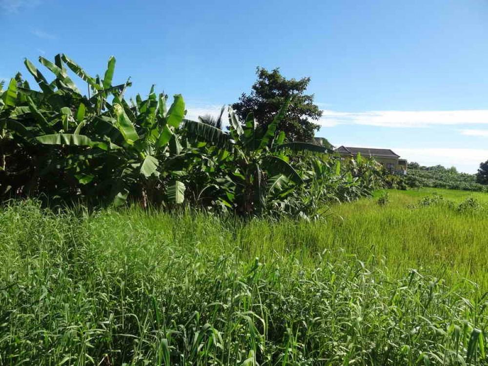 Beautiful Freehold Land in Pererenan Canggu