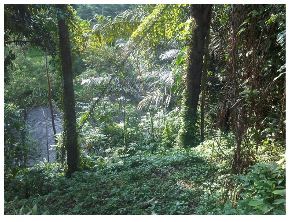 FIRST LOCATION IN UBUD