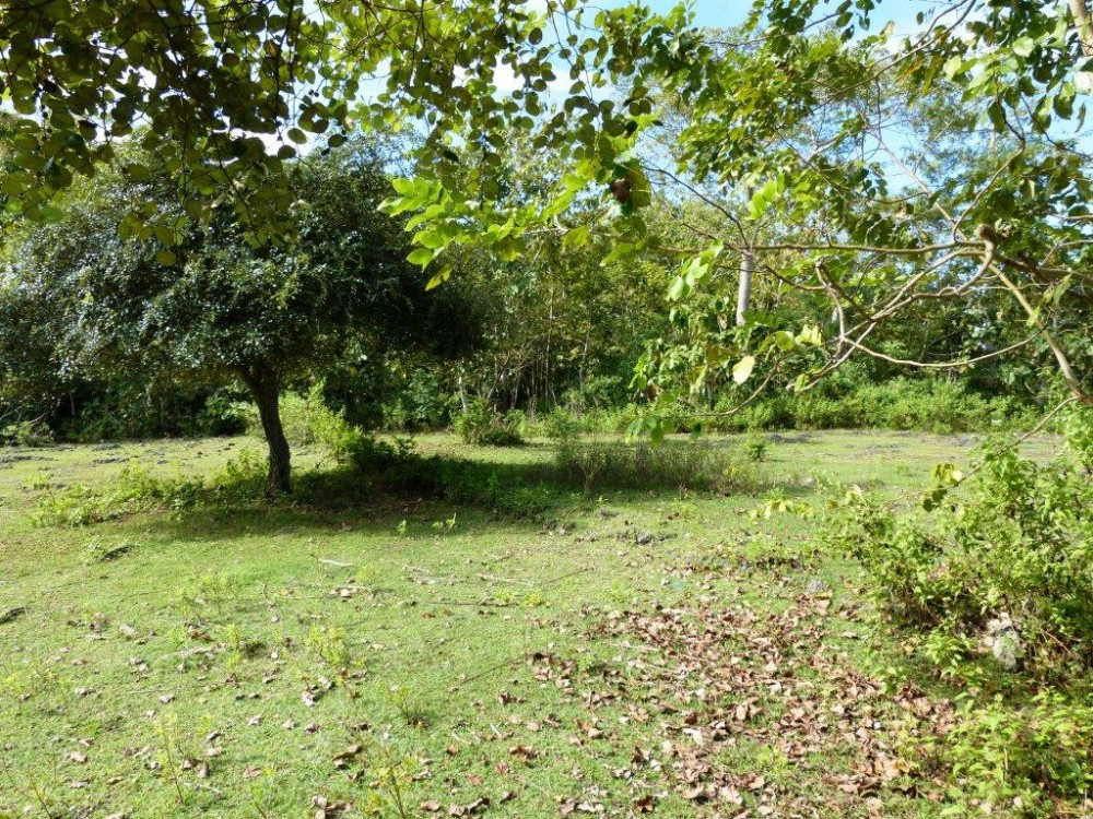 Freehold land with great view for sale in Balangan