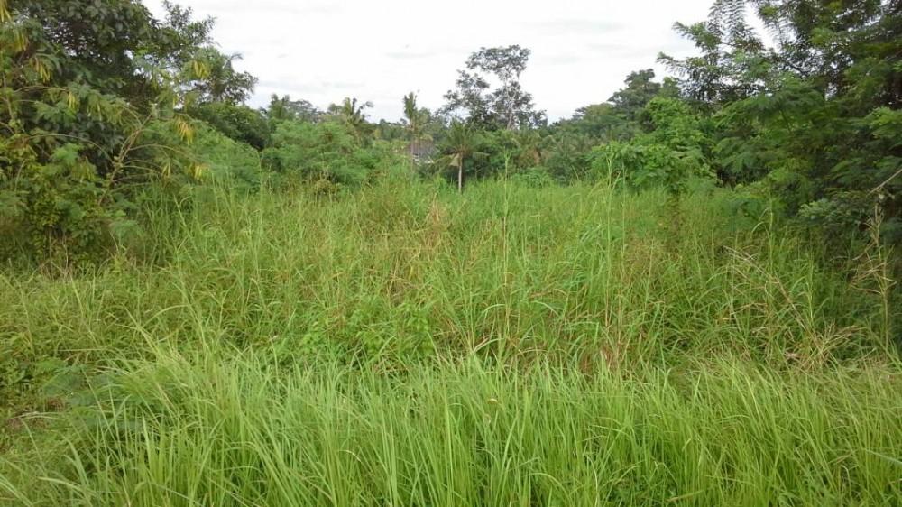 Luas freehold Tanah dijual di Gianyar