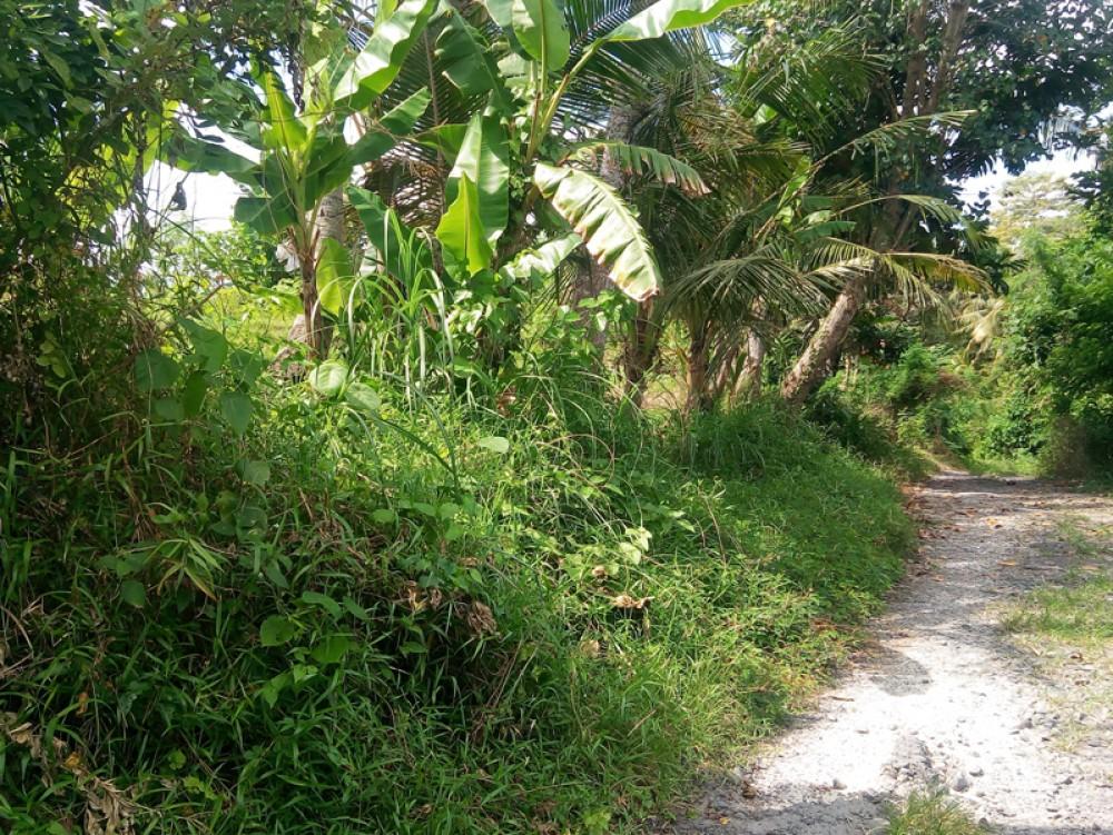 Tanah pemukiman dengan sertifikat hak milik dengan harga murah di Tabanan