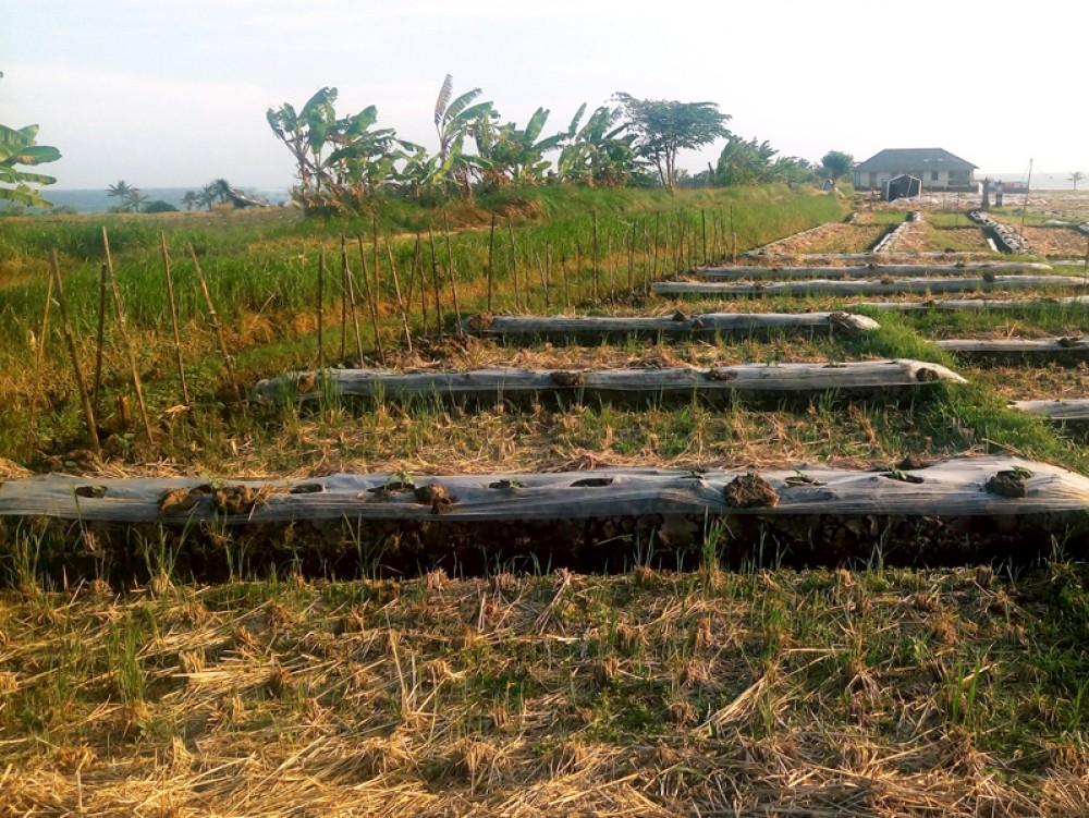 Tanah dengan pemandangan laut untuk investasi yang bagus di Tabanan