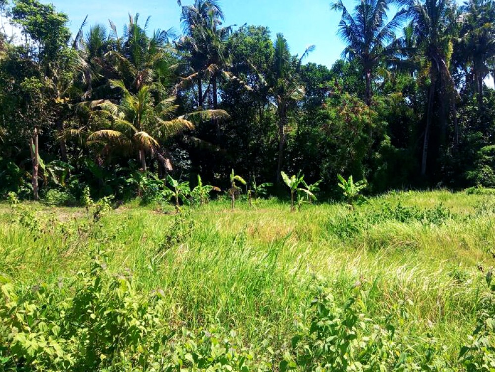 Amazing land in a quiet area of Pererenan