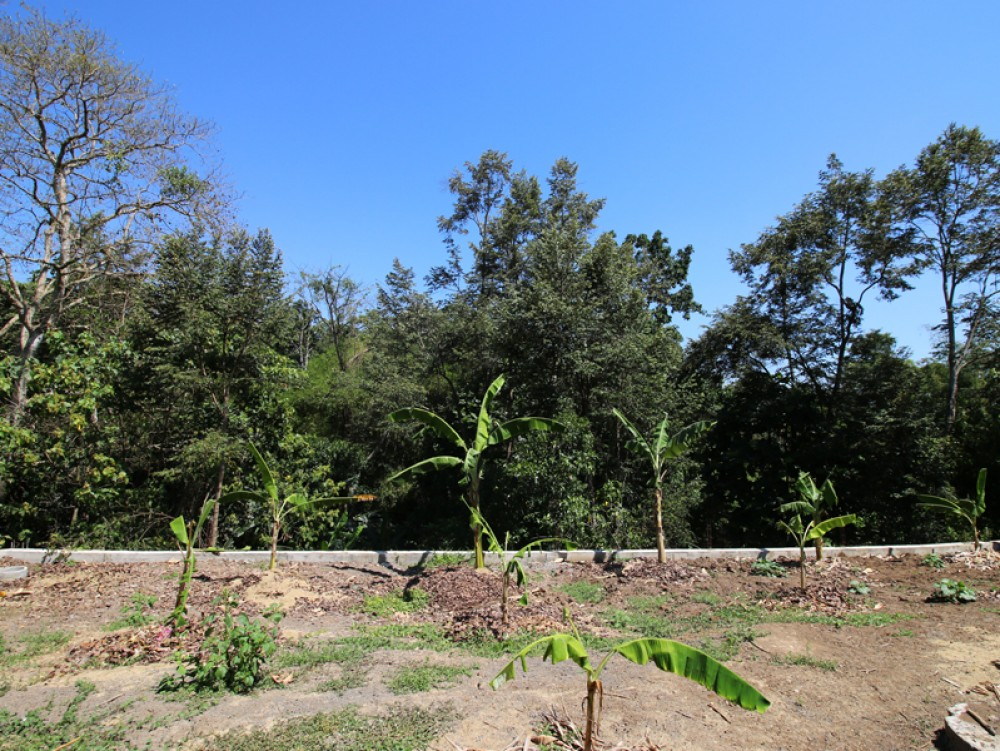 Amazing jungle view freehold land in luxury community