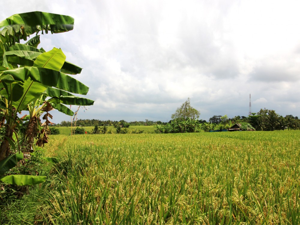 Gorgeous Land In Prime area of Tanah Lot