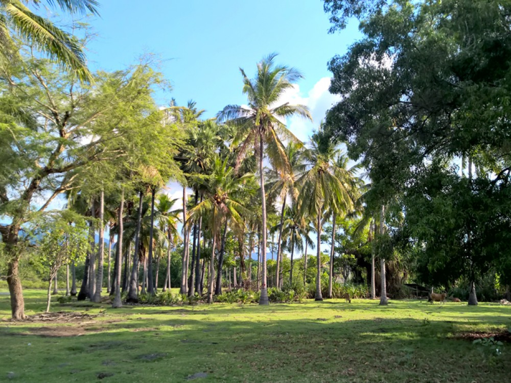 Amazing opportunity beach front freehold land