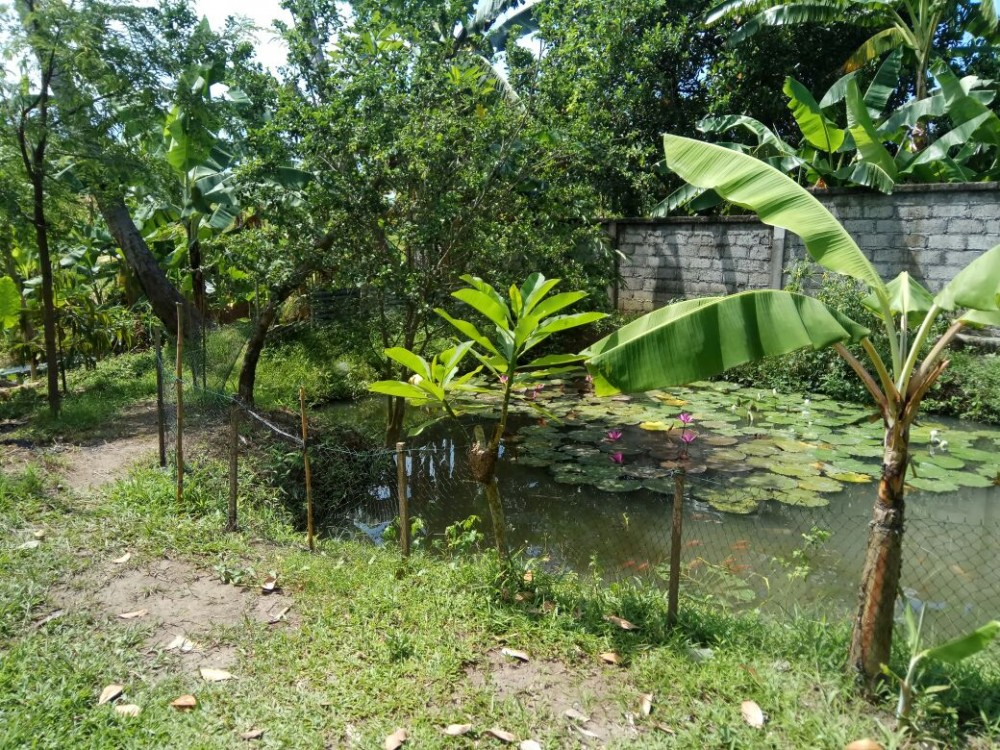 Rice Paddy View 13 Are Perfect for Villa