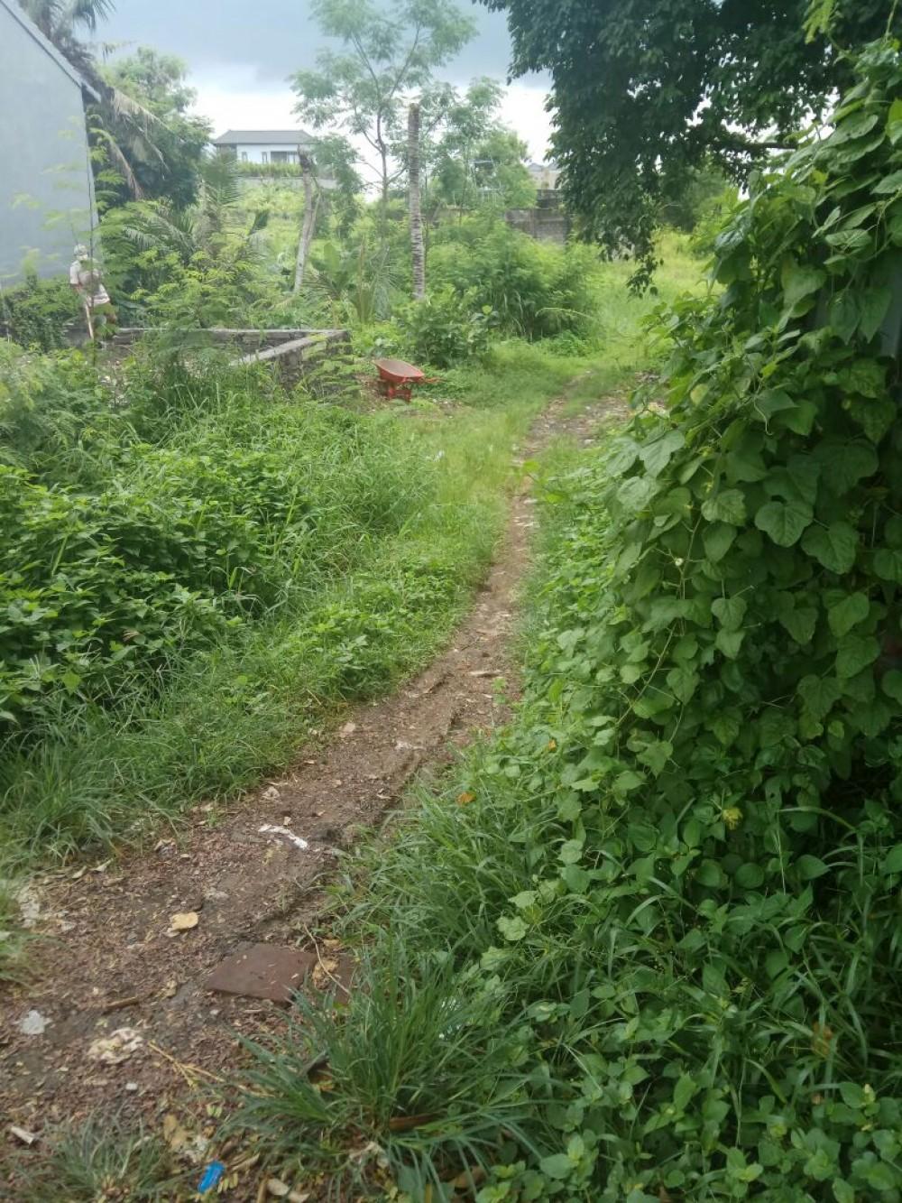 Battu Bolong Parfait pour le développement