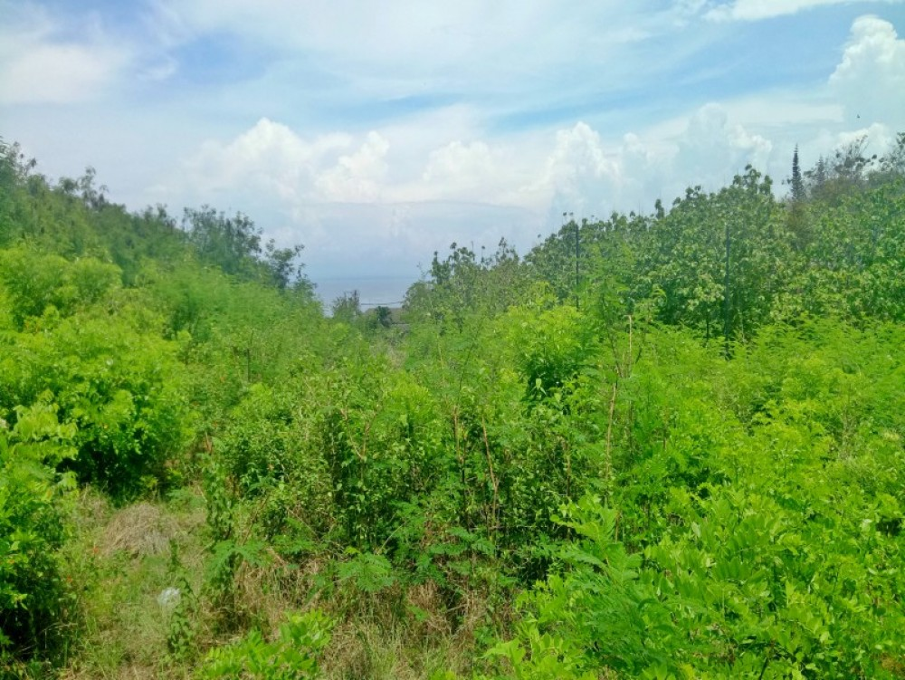 magnificent ocean view land for sale 65are