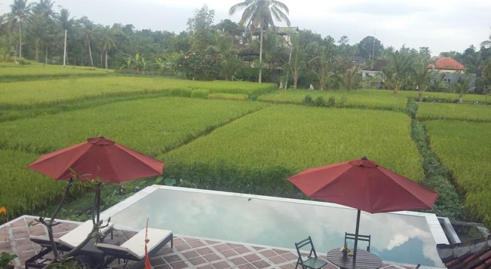 AMAZING VILLA WONDERFUL RICE FIELD VIEW