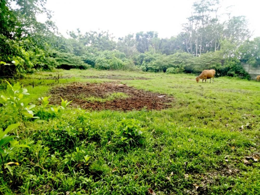 terrain naturel à vendre 17 sont dans un marais