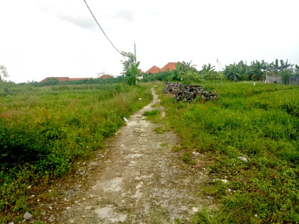 rice paddy field land for sale 17 are