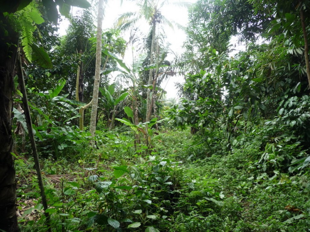 NICE VIEW LAND FOR SALE IN KEDISAN TEGALALANG