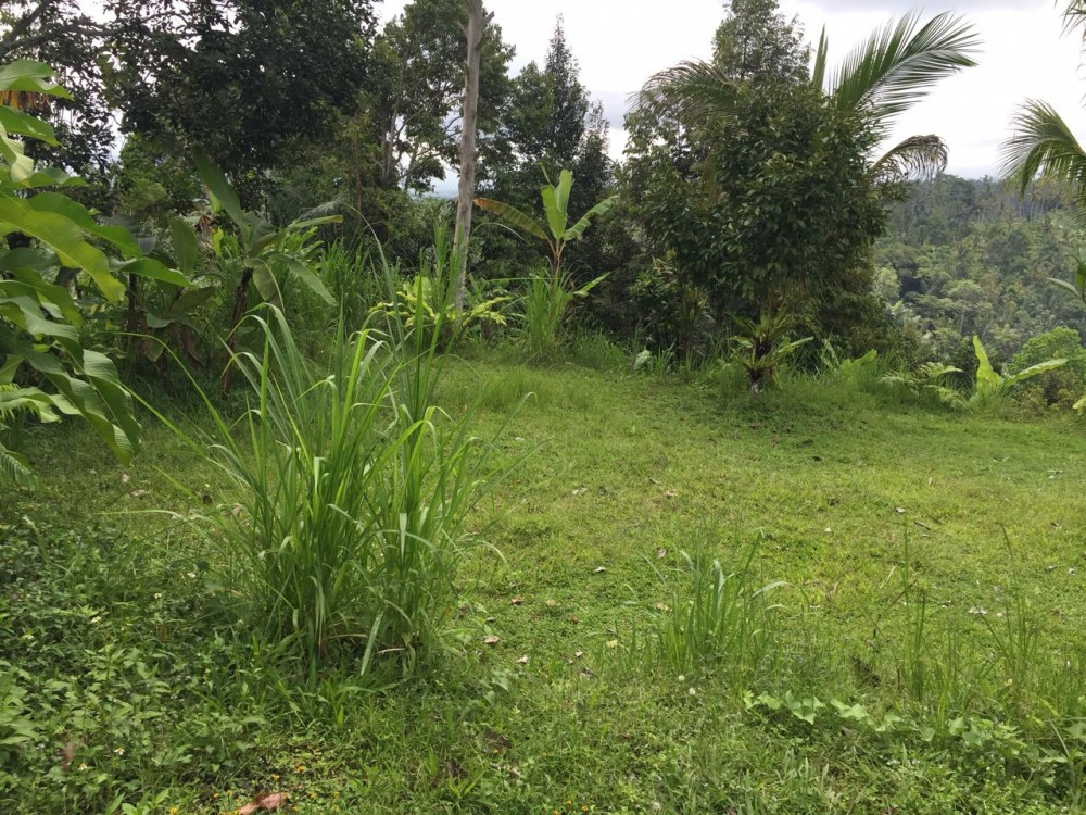 Spacious Freehold land for Sale in Payangan