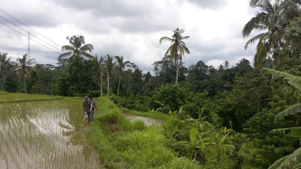 NICE LAND FOR SALE IN AREA OF TEGALALANG