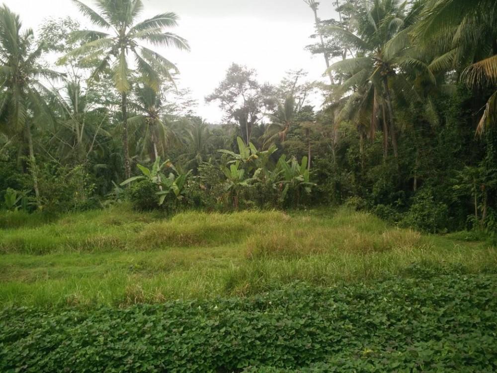 BEAUTIFUL LAND FOR SALE IN TANGGAYUDA