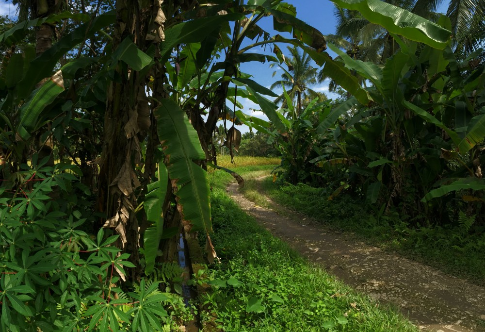 Nice rice paddies land for lease in Kendran Tegalalang