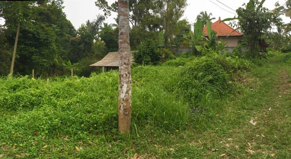 Tanah sepi untuk disewakan di Kendran-Tegalalang