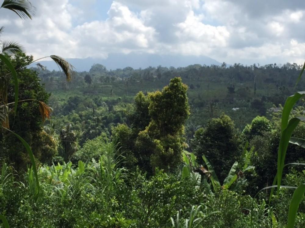 Big land for lease in Kerta Payangan