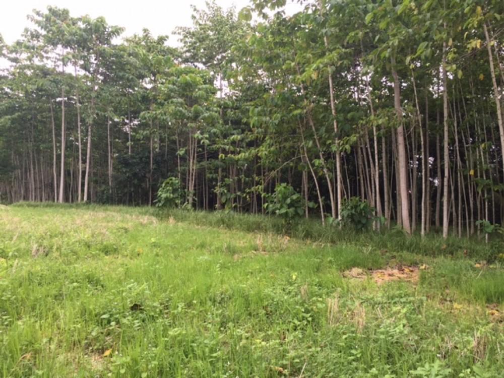 Tanahnya bagus dengan pemandangan hutan dan pepohonan di Pejeng Tampaksiring