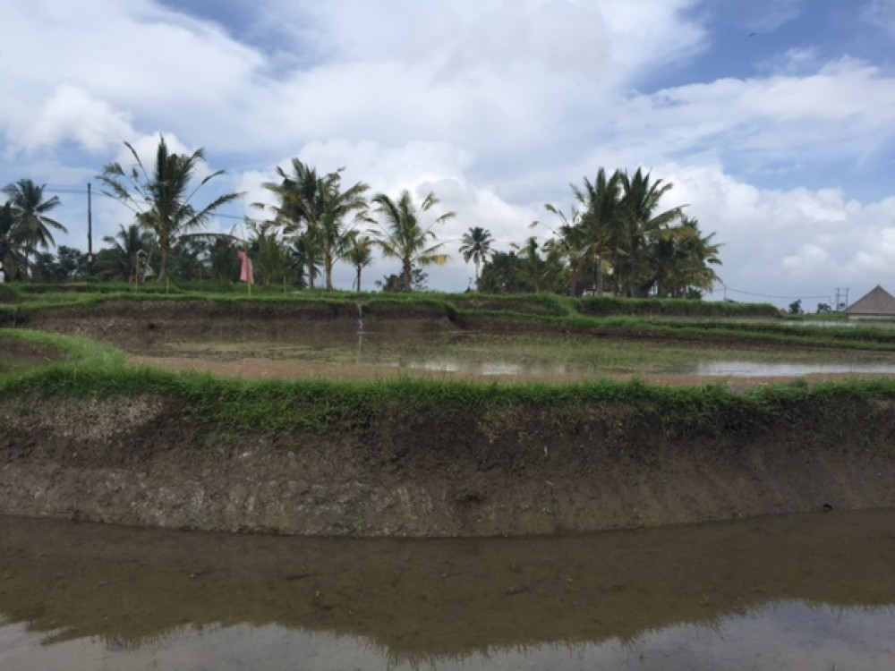 Wide view land for lease in Laplapan Ubud