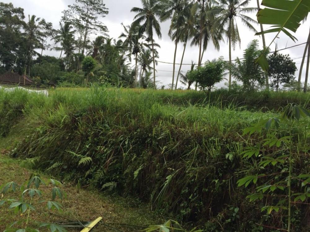 Tanah terong yang dijual di Pejeng Tampaksiring