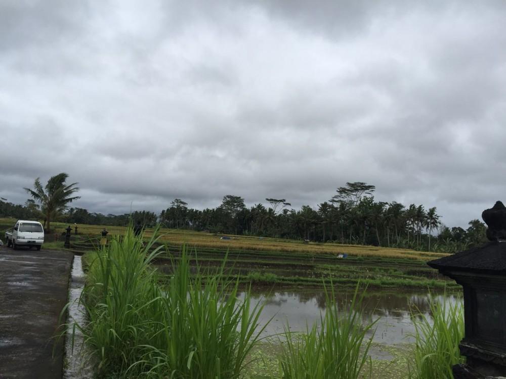 Gunung dan sawah melihat tanah dijual di Pejeng Kawan