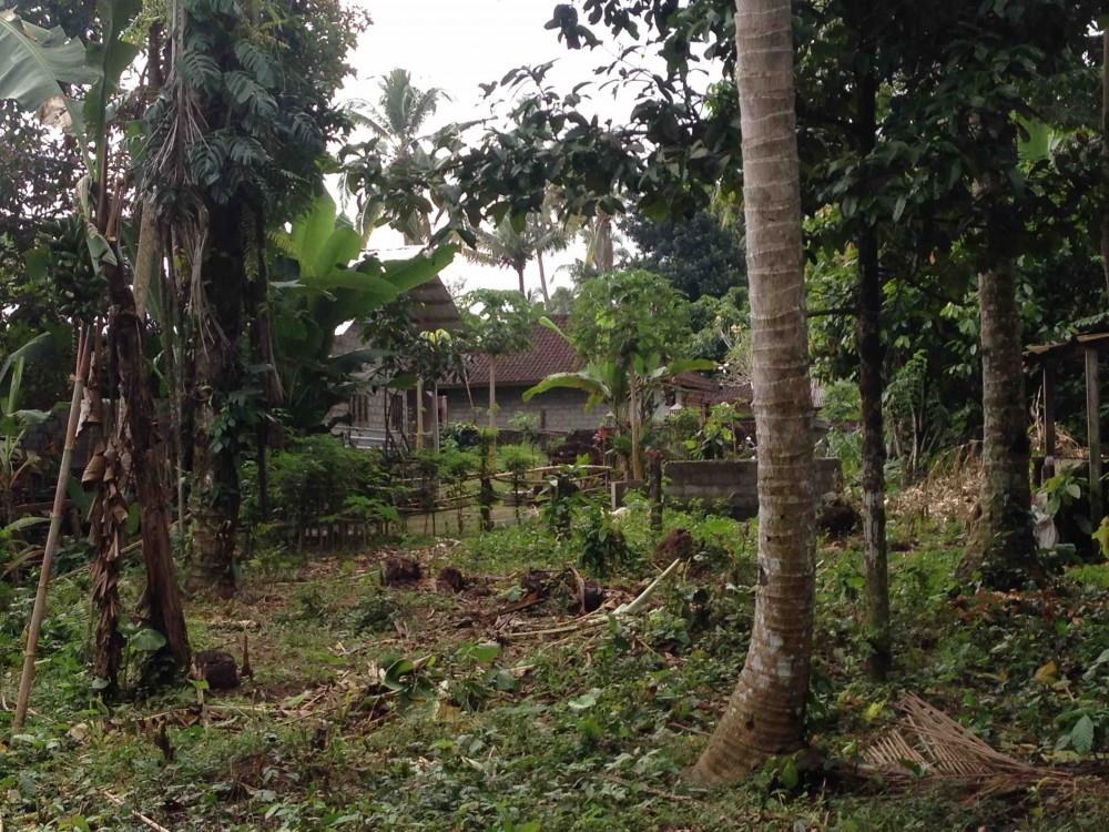 Nice view land in Kedisan Tegalalang