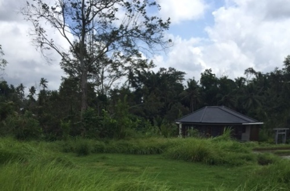 Amazing land for lease 25 years in Tegalalang