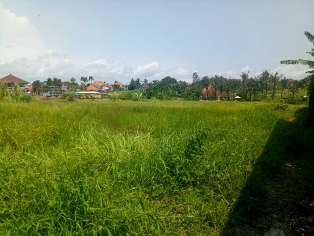 Rice Paddies View 10 Are Land in Canggu
