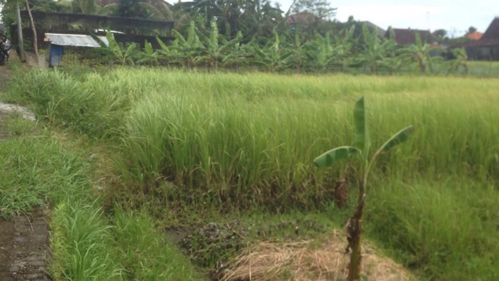 sewa tanah cocok untuk pengembangan villa di canggu