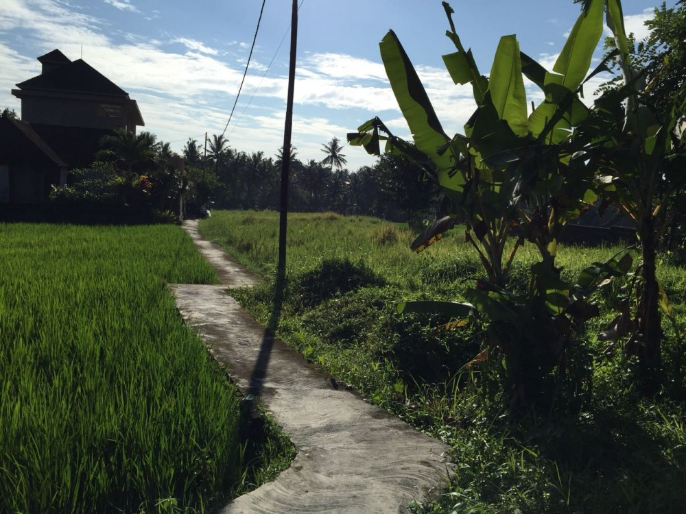Nice view and large size of land in Petulu-Ubud