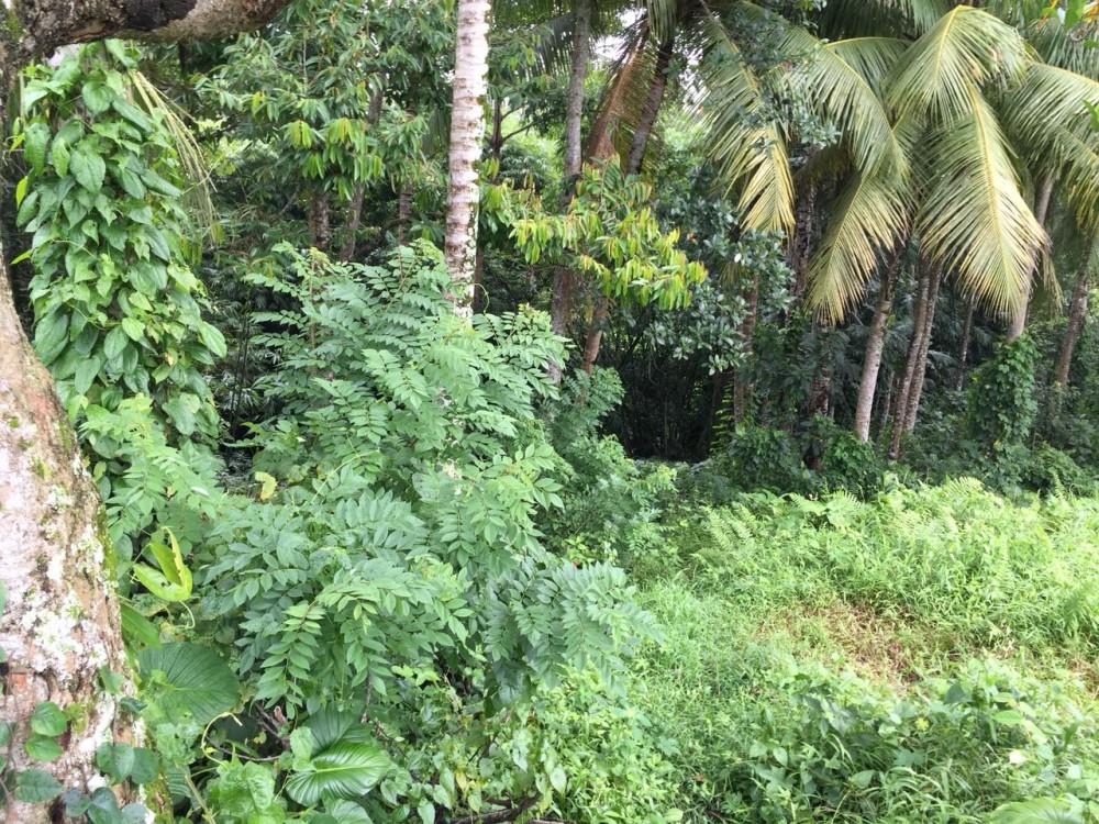 tanah dijual di mainroad Jukutpaku-Singakerta