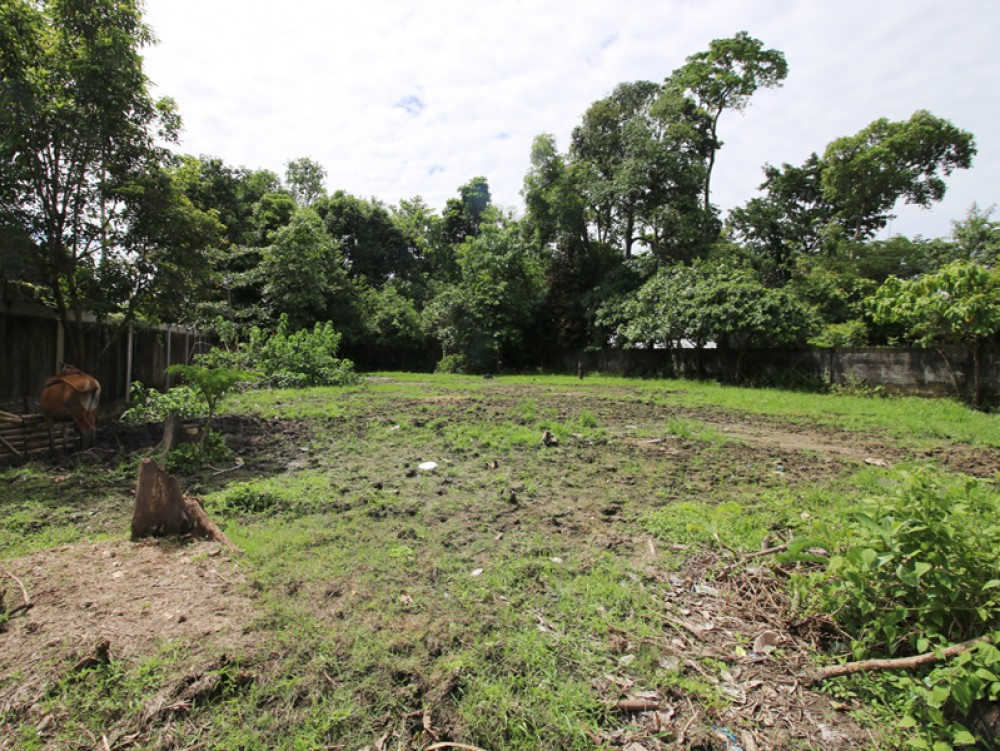 Great shaped freehold land in Pererenan