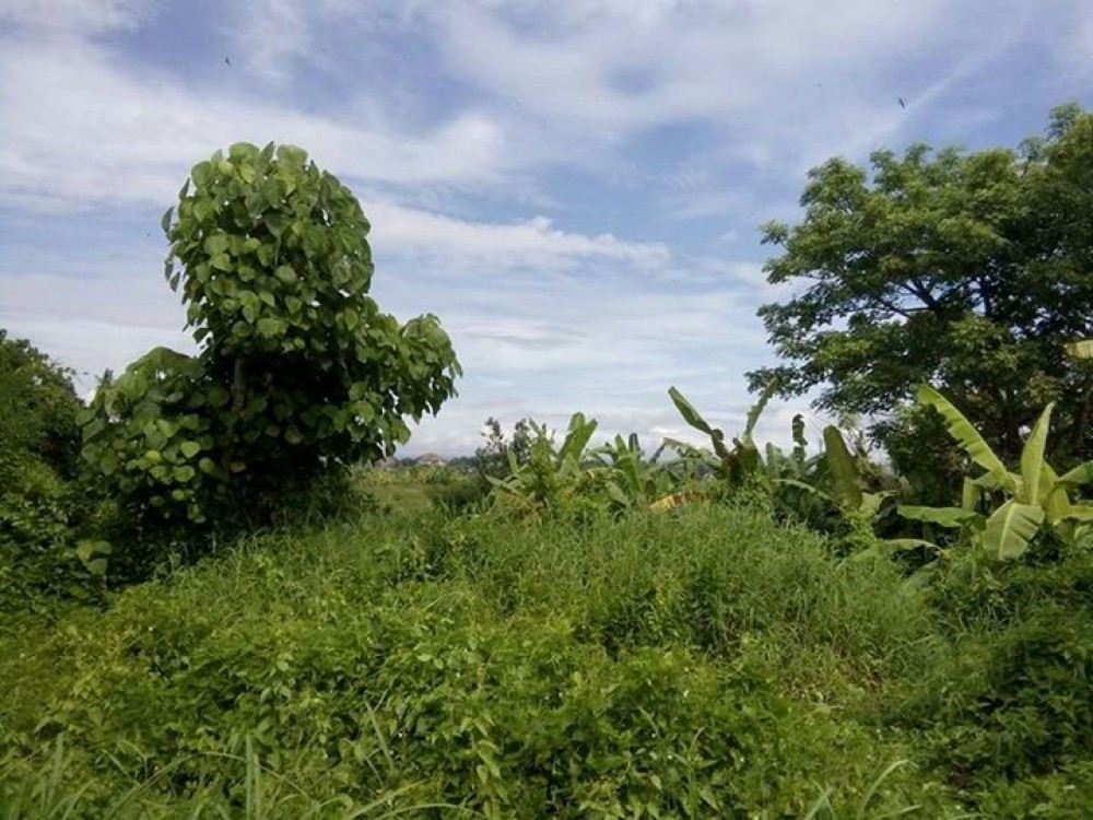 Perfect land for Villa in Canggu