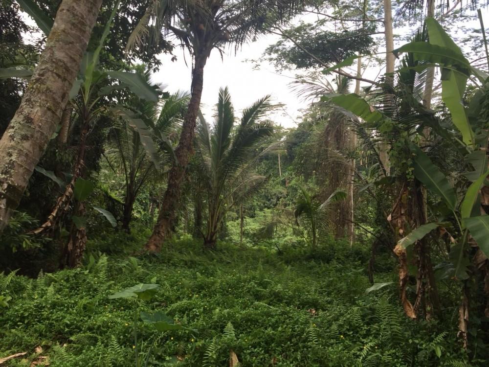 Belle vue terrain à louer à Pejeng kangin